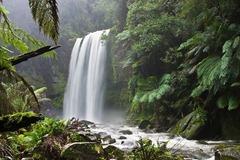 Wikimedia: Dschungel