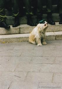Kölner Polizei ist auf den Hunde gekommen? (Foto: Haarkötter)